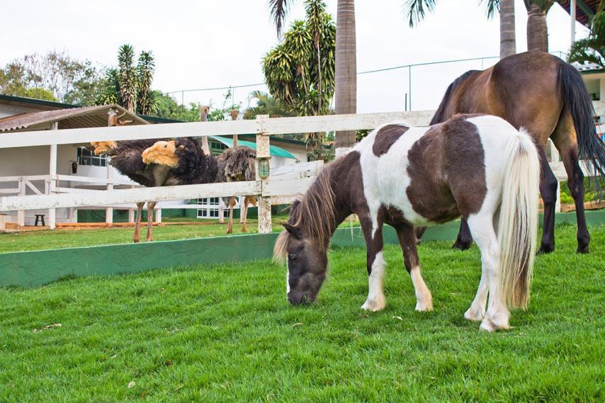 O Pônei e o Cavalo
