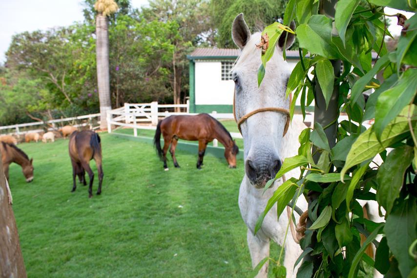 Cavalos no Hotel Fazenda Vale Amanhecer