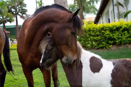 hotel_fazenda_vale_amanhecer_perto_bh_cavalos
